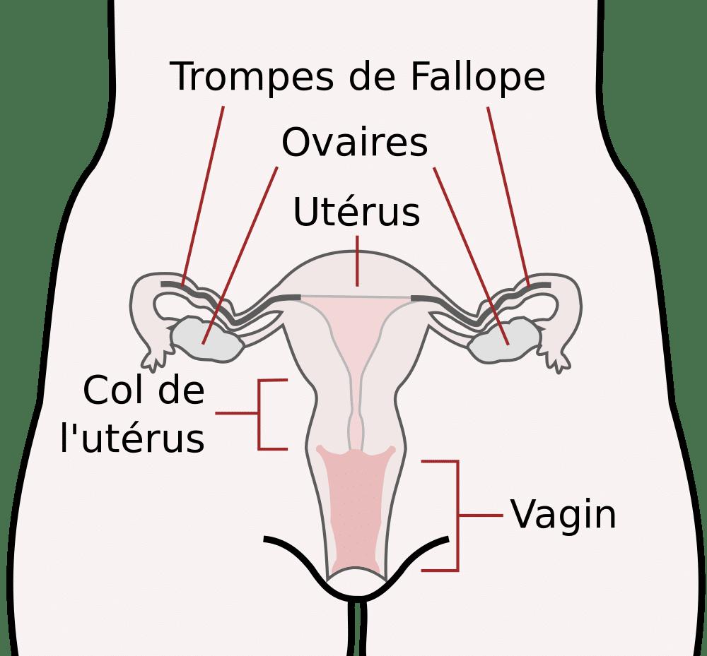 Douleurs pendant une période d'ovulation